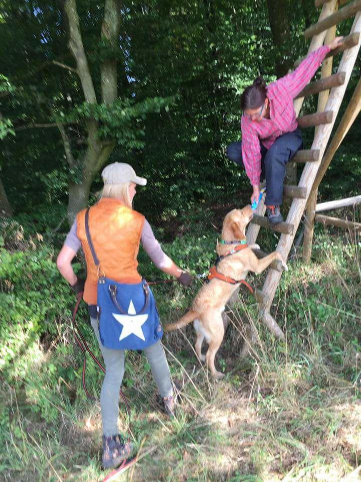 Mantrailing-Übung im Wald